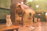 Cat Cafe てまりのおうちのイメージ