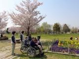 毎年春は、利用者さんとお花見しますよ♪